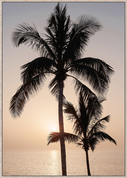 Picture of Sunset Palm Framed Canvas